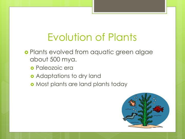Evolution of plants