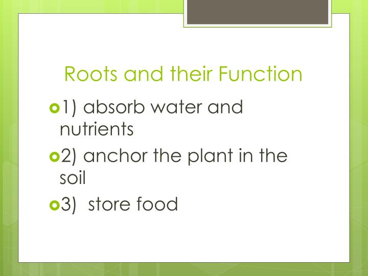 Roots and their Function