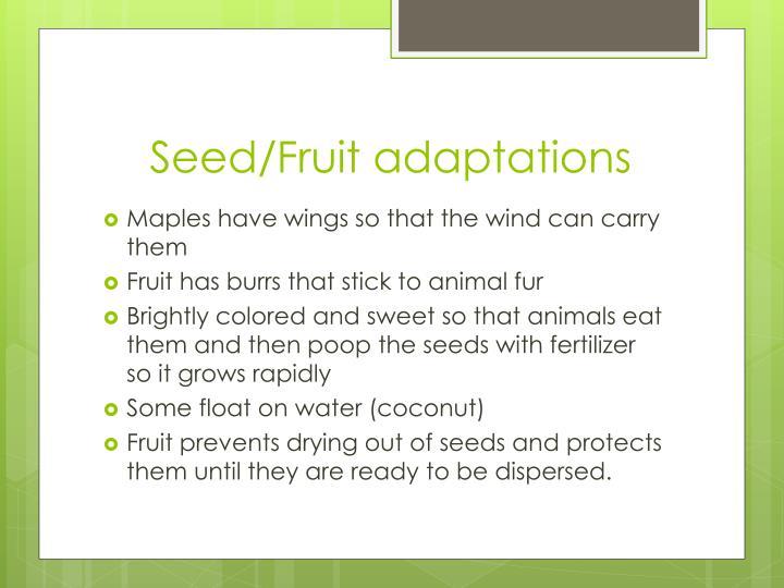 Seed/Fruit adaptations