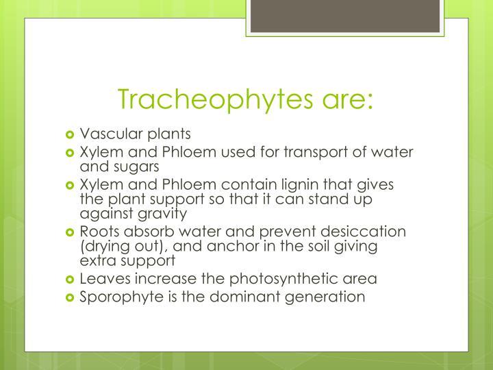 Tracheophytes