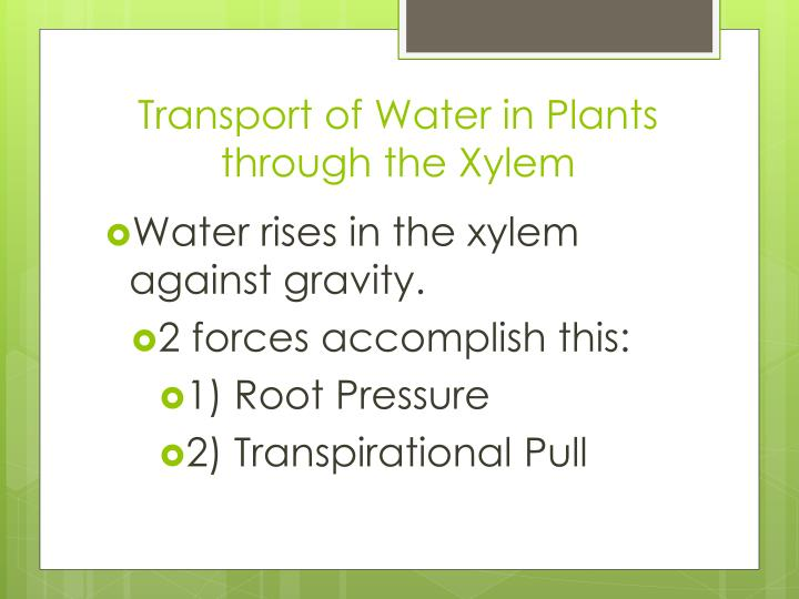 Transport of Water in Plants through the Xylem