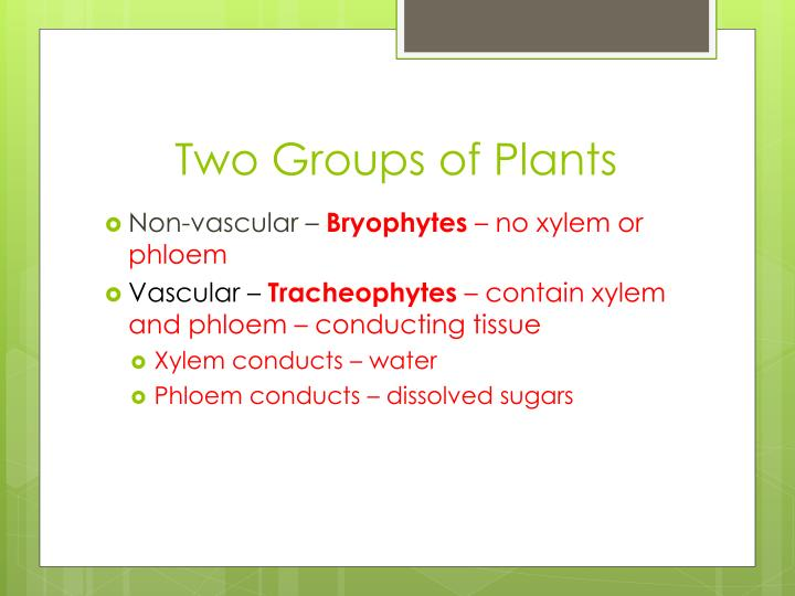 Two Groups of Plants
