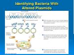 identifying bacteria with altered plasmids