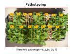 pathotyping1