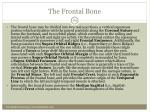 the frontal bone