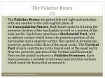 the palatine bones