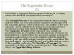 the zygomatic bones