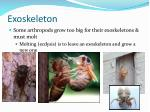 exoskeleton1