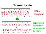 transcripci n1