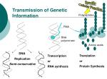 transmission of genetic information