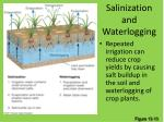 salinization and waterlogging