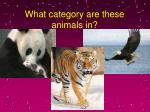 what category are these animals in