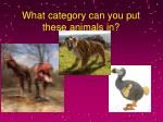 what category can you put these animals in