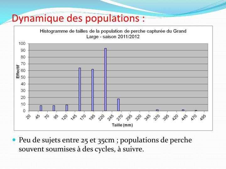 Dynamique des populations :