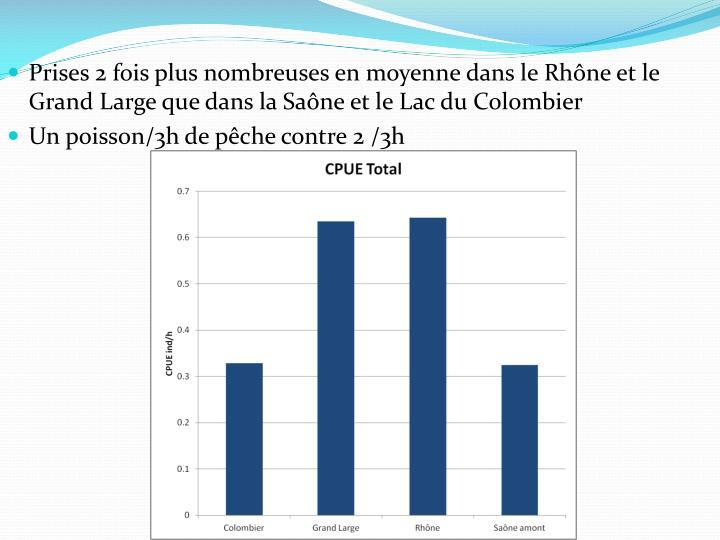 Prises 2 fois plus nombreuses en moyenne dans le Rhône et le Grand Large que dans la Saône et le Lac du Colombier