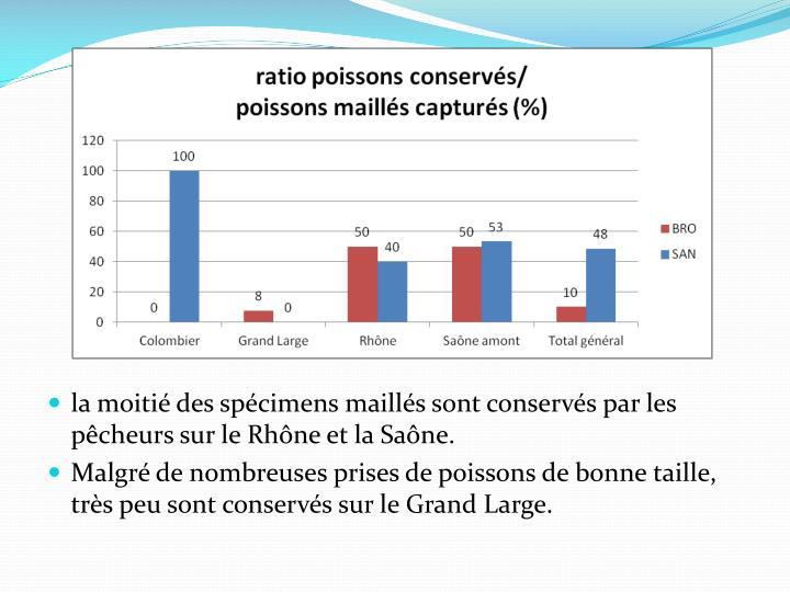 la moitié des spécimens maillés sont conservés par les pêcheurs sur le Rhône et la Saône.