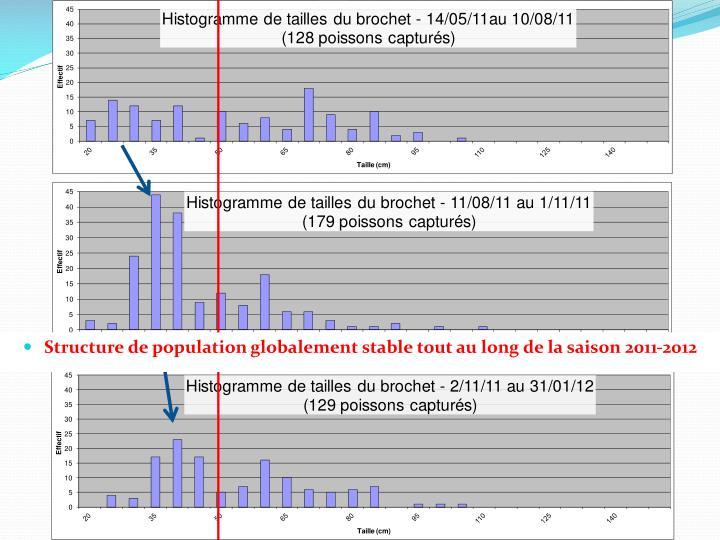 Structure de population globalement stable tout au long de la saison 2011-2012