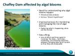 chaffey dam affected by algal blooms