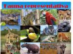 fauna representativa