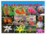 flora representativa
