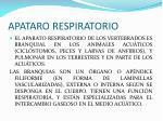 apataro respiratorio