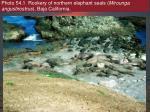 photo 54 1 rookery of northern elephant seals mirounga angustirostrus baja california