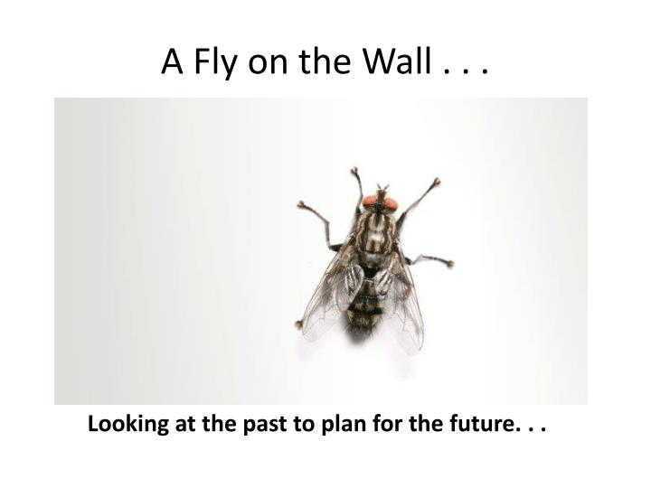 a fly on the wall n.
