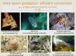 intra taxon predation efficient conversion y ex a high yield of reserve on food