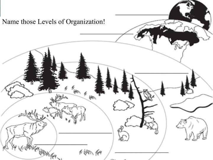 Name those Levels of Organization!