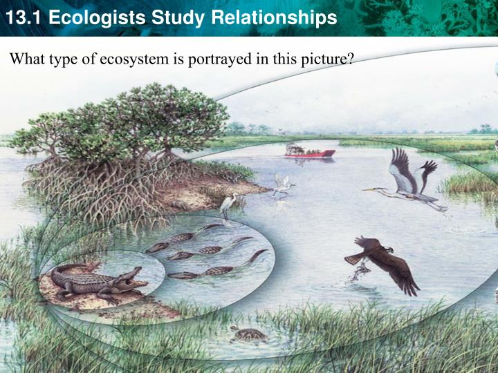 What type of ecosystem is portrayed in this picture?