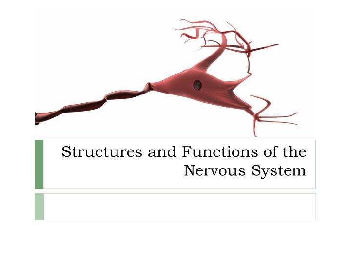 structures and functions of the nervous system n.