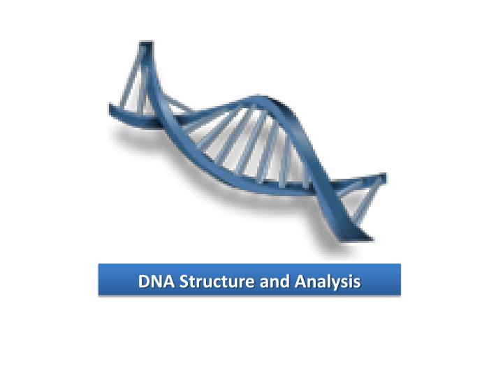 dna structure and analysis n.