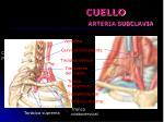 cuello arteria subclavia