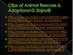 clips of animal rescues adoptions 3 enjoy