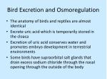 bird excretion and osmoregulation