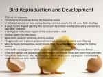 bird reproduction and development