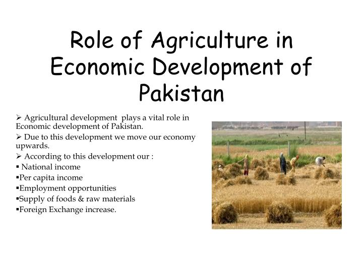 role of agriculture in economic development of pakistan n.