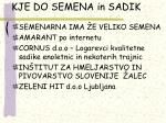 kje do semena in sadik