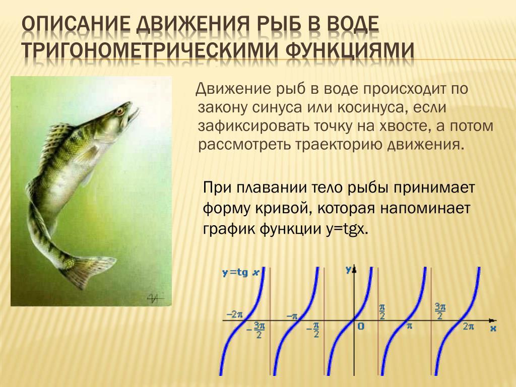 Картинки как рыбы движутся в воде