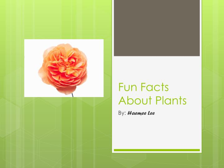 fun facts about plants n.