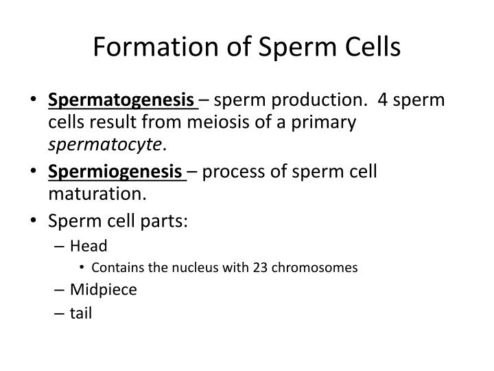 Process of forming sperm cells are not