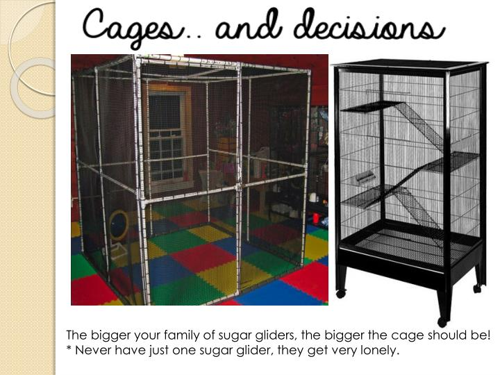 The bigger your family of sugar gliders, the bigger the cage should be!