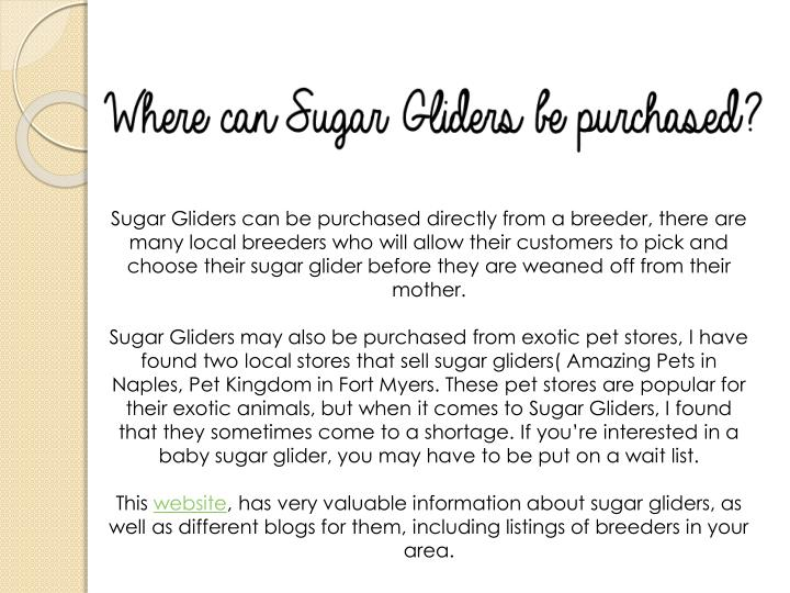 Sugar Gliders can be purchased directly from a breeder, there are