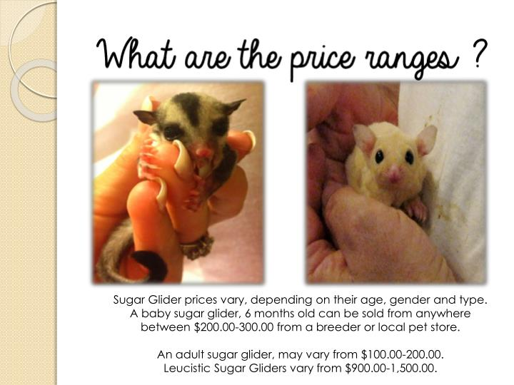 Sugar Glider prices vary, depending on their age, gender and type.