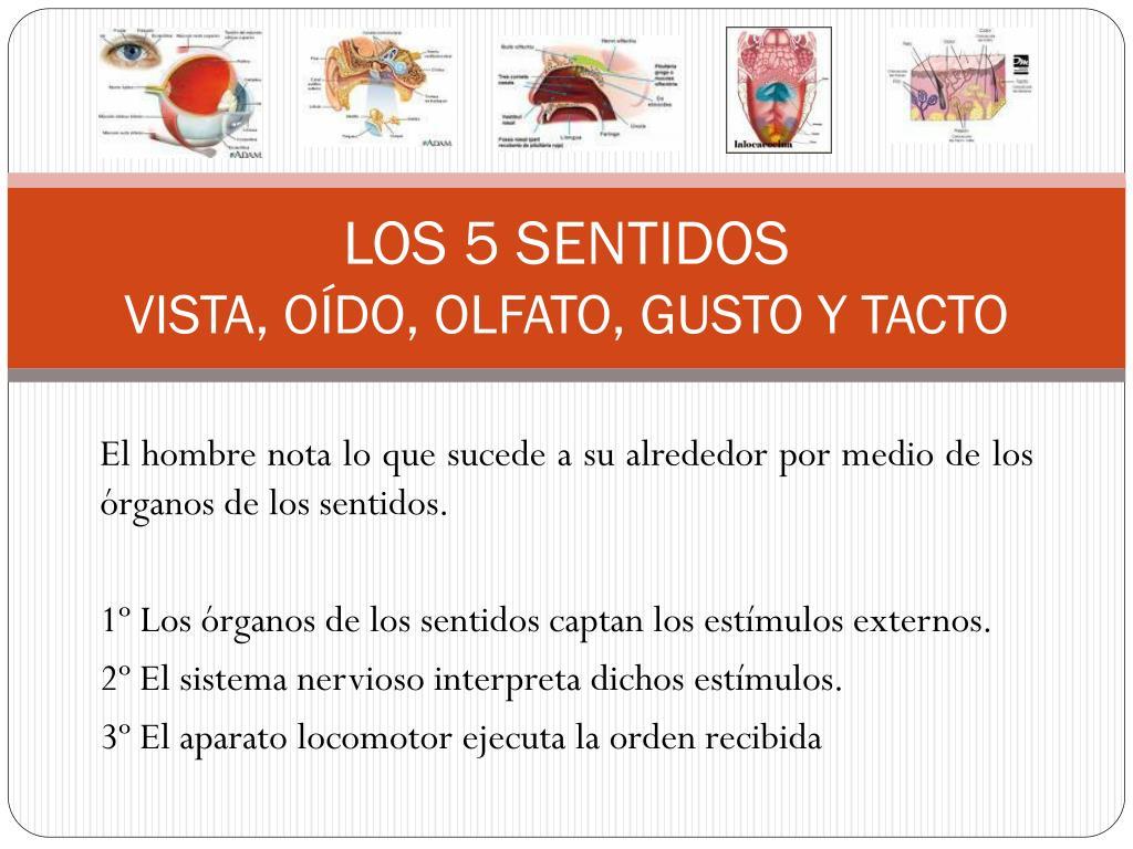 PPT - LOS 5 SENTIDOS VISTA, OÍDO, OLFATO, GUSTO Y TACTO PowerPoint ...