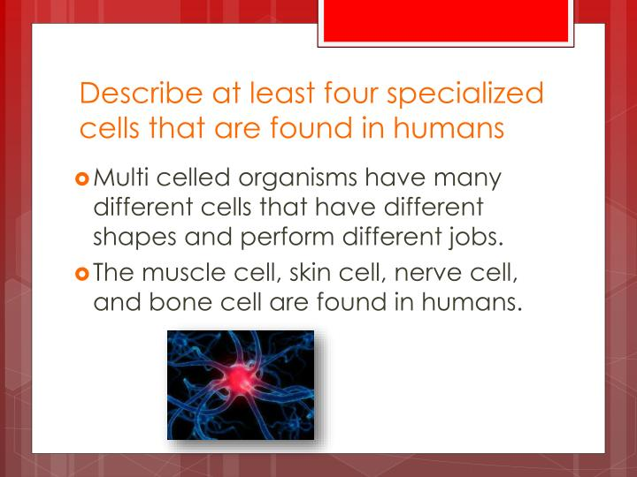 Describe at least four specialized cells that are found in