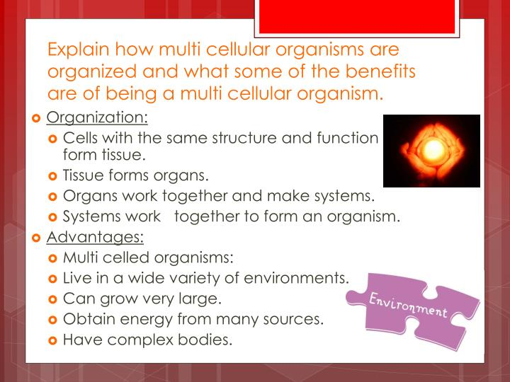 Explain how multi cellular organisms are organized and what some of the benefits are