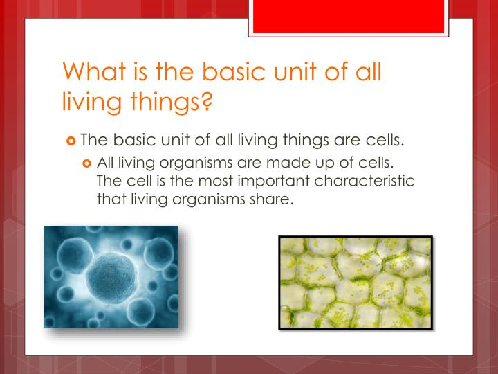 What is the basic unit of all living things?