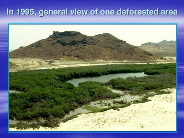 In 1995, general view of one deforested area