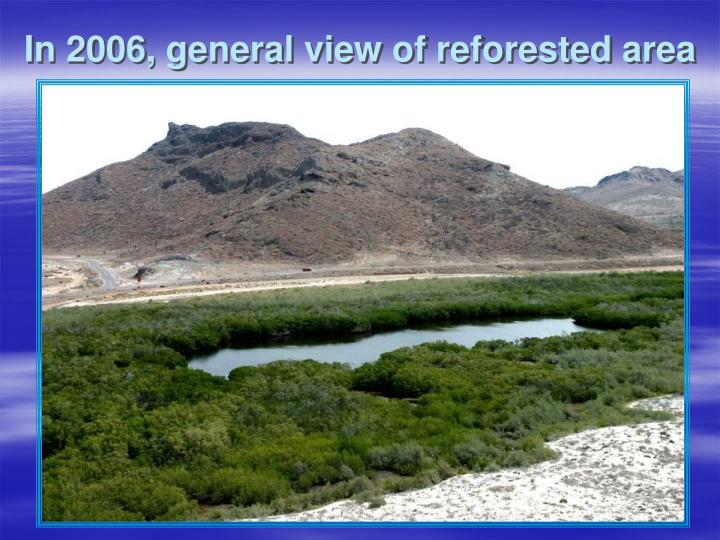 In 2006, general view of reforested area